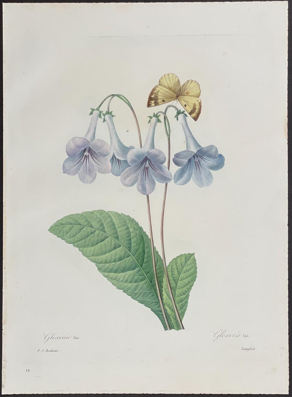 Redoute - Gloxinia & Butterfly