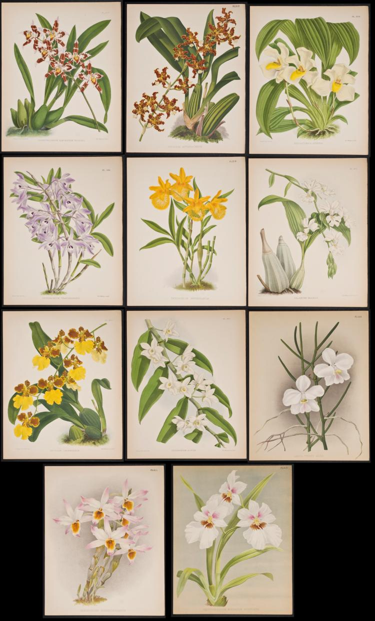 Warner - 11 Orchid Lithographs