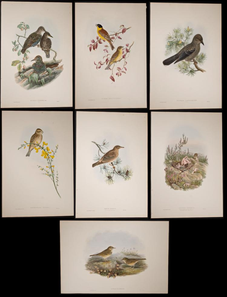 Gould - 7 Folio Bird Lithographs