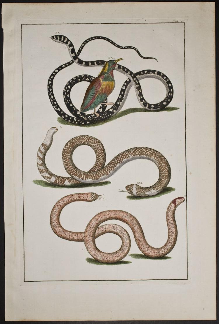 Seba - Snakes & Bird. 7
