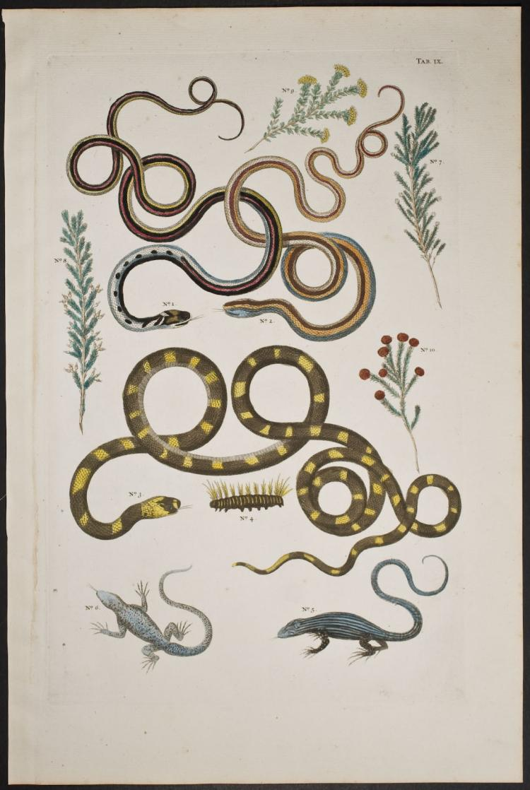 Seba - Snakes, Lizards, Plants. 9