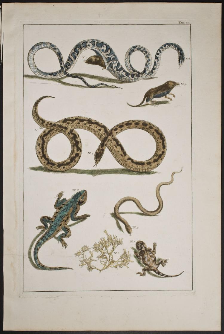 Seba - Snakes & Lizards. 8