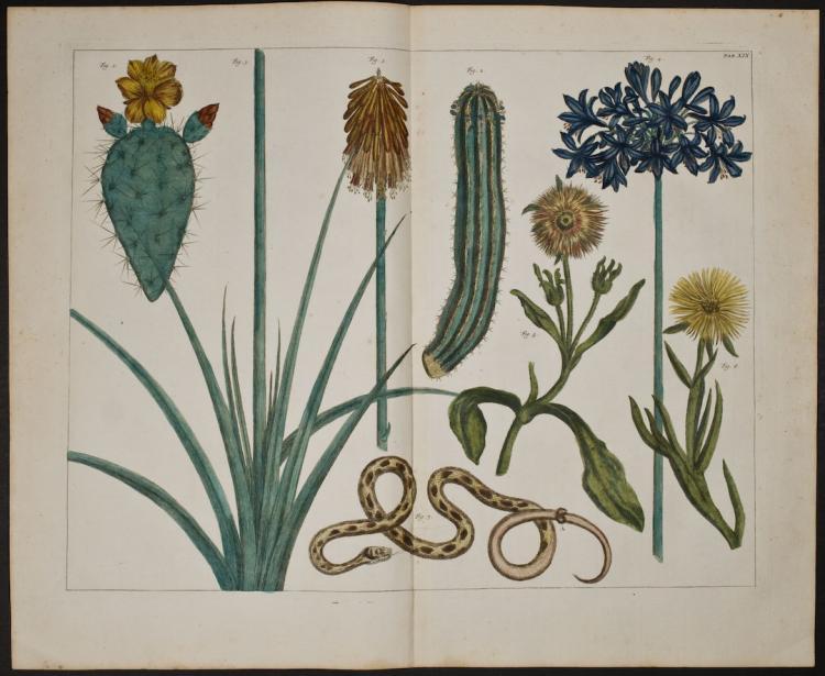 Seba - Flowers, Cactus, Snake. 19