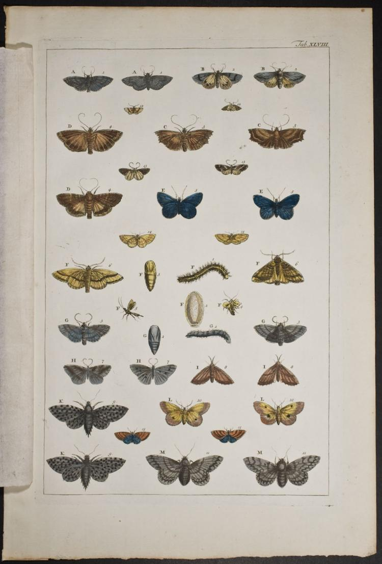 Seba - Butterflies or Moths. 48