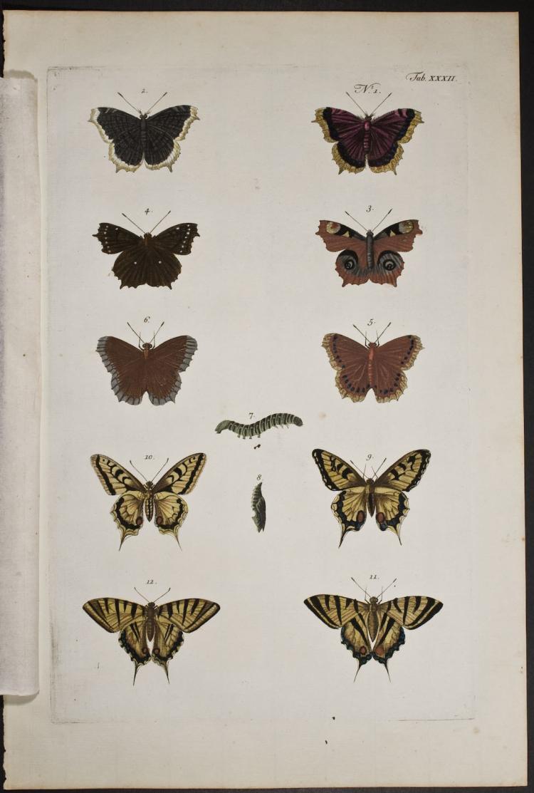 Seba - Butterflies or Moths. 32