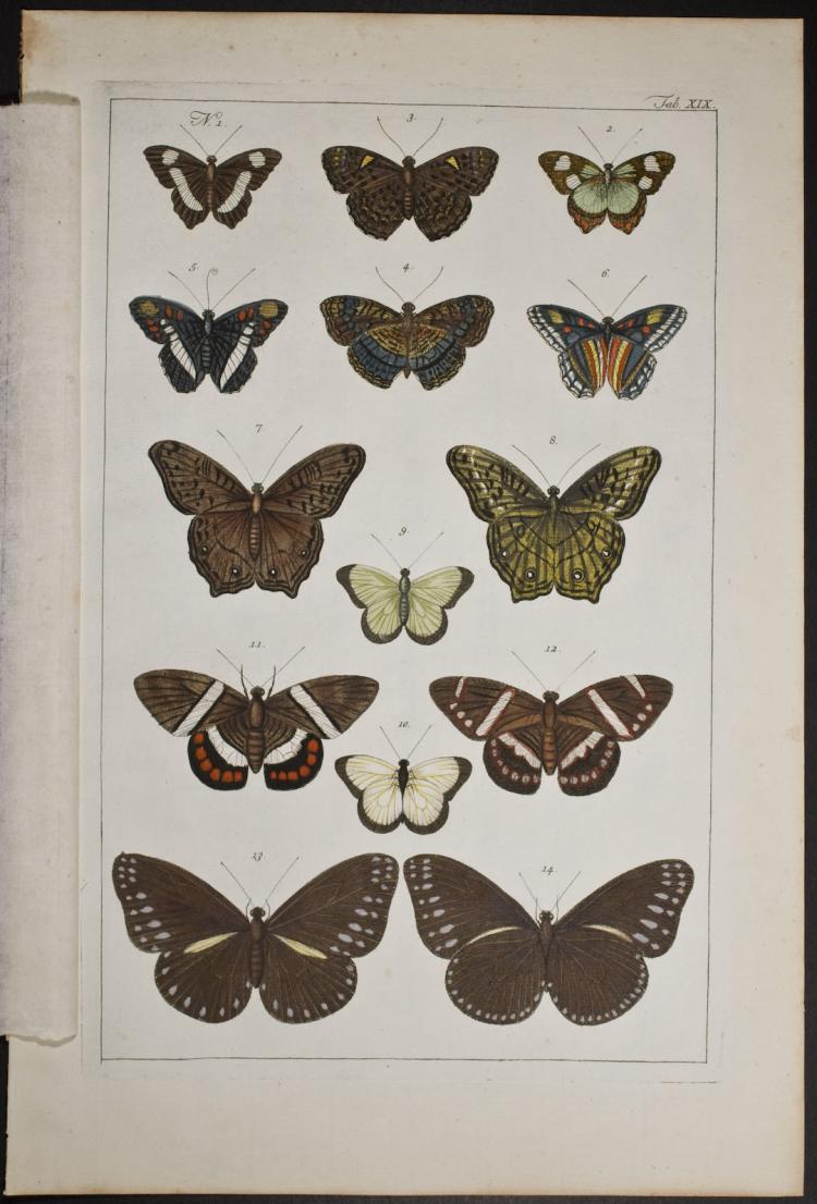 Seba - Butterflies or Moths. 19