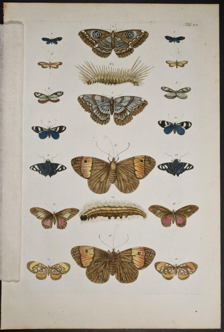 Seba - Butterflies or Moths. 20