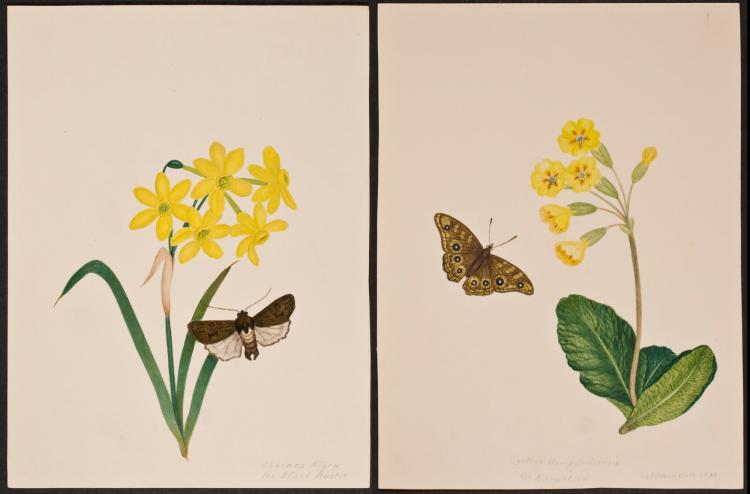 Slaney - Pair of Original Watercolors - Moth, Butterfly, & Flowers