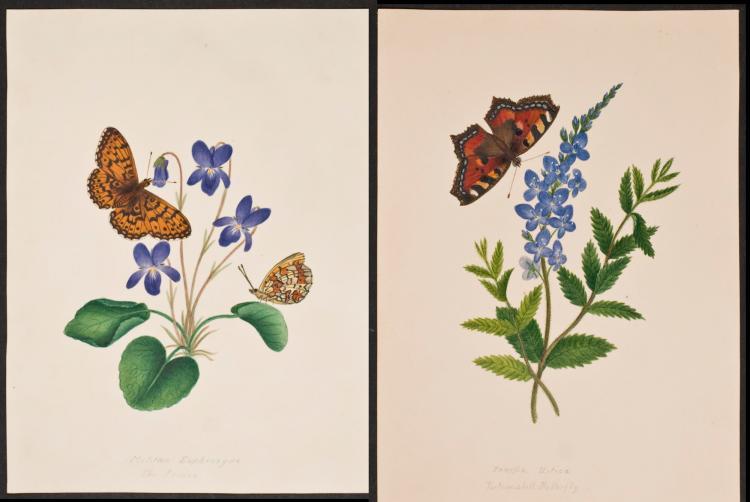 Slaney - Pair of Original Watercolors - Butterflies & Flowers