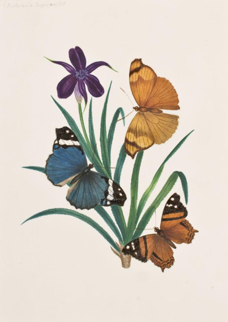 Slaney - Original Watercolor - Butterfly