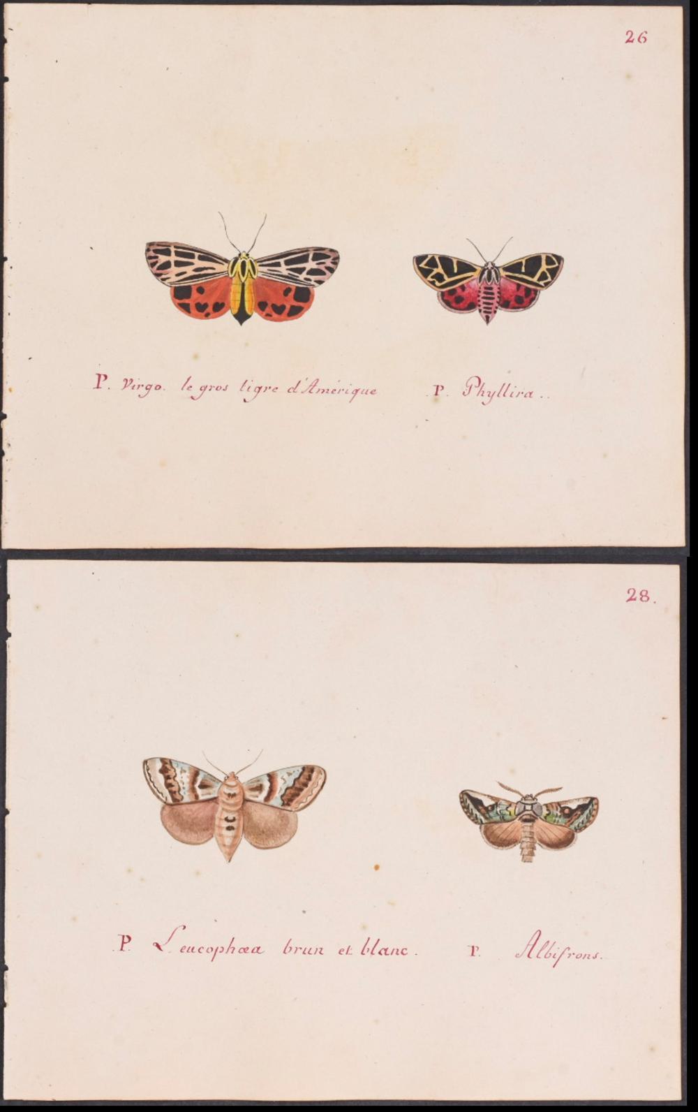 Abbot - Pair of Original Watercolors of Moths