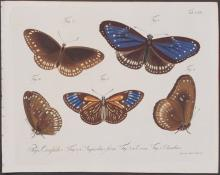 Jablonsky - Butterflies or Moths. 120