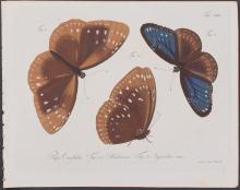 Jablonsky - Butterflies or Moths. 119