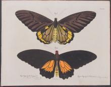 Jablonsky - Butterflies or Moths. 3