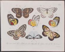 Jablonsky - Butterflies or Moths. 101