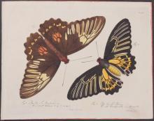 Jablonsky - Butterflies or Moths. 4
