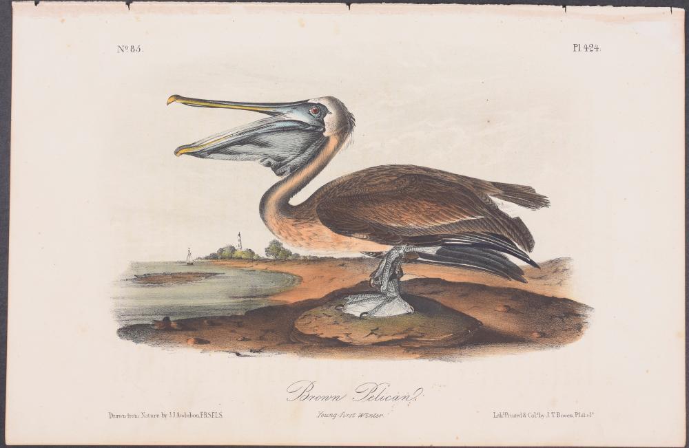Lot 11023: Audubon - Brown Pelican. 424