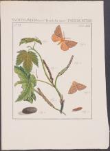Lot 11028: Sepp - 11 Entomology Engravings