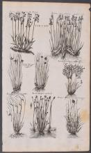 Lot 11029: Valentini - 21 Botanical Engravings