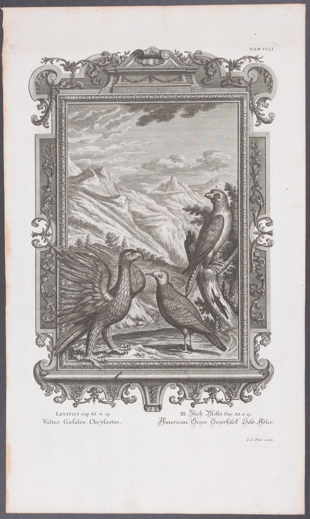 Lot 11030: Scheuchzer - 10 Bird Engravings