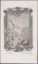 Lot 11033: Scheuchzer - 18 Botanical Engravings