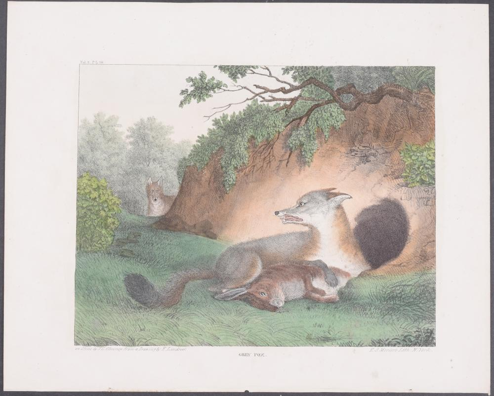 Lot 11035: Doughty - 9 Bird Prints