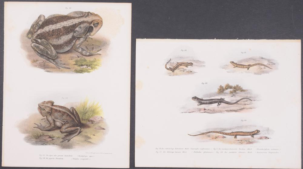 Lot 11037: Fitzinger - 18 Natural History Lithographs