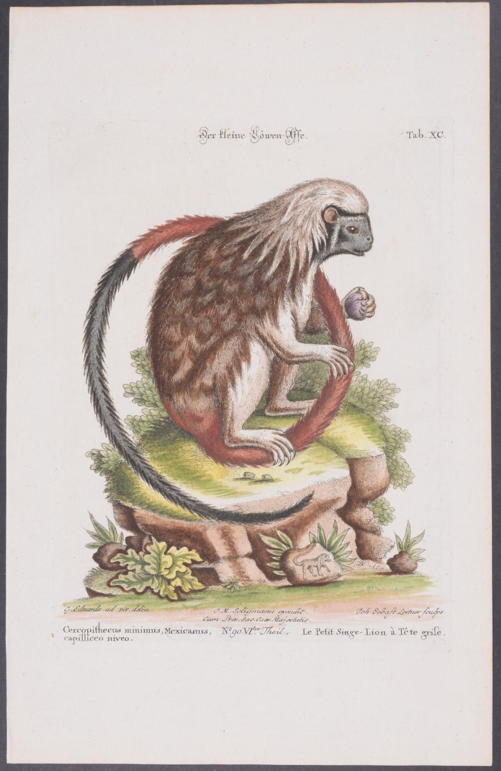 Lot 11038: Edwards & Seligmann - 4 Monkey & Bat Engravings