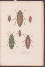 Lot 11040: Blanchard - 58 Natural History Prints