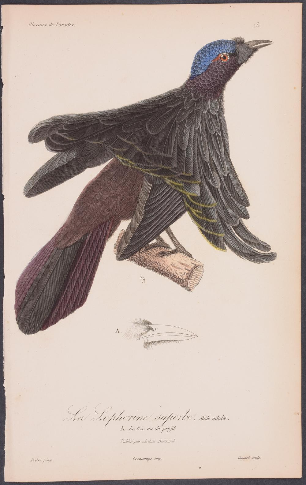 Lot 11051: Lesson - Bird of Paradise. 13