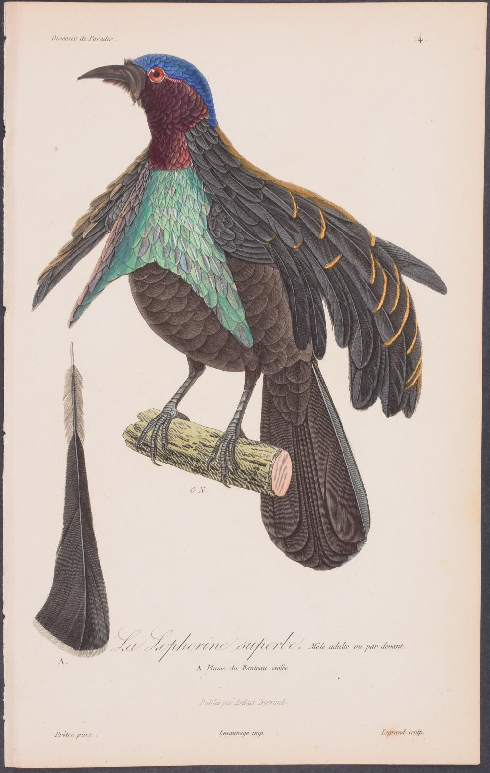 Lot 11052: Lesson - Bird of Paradise. 14
