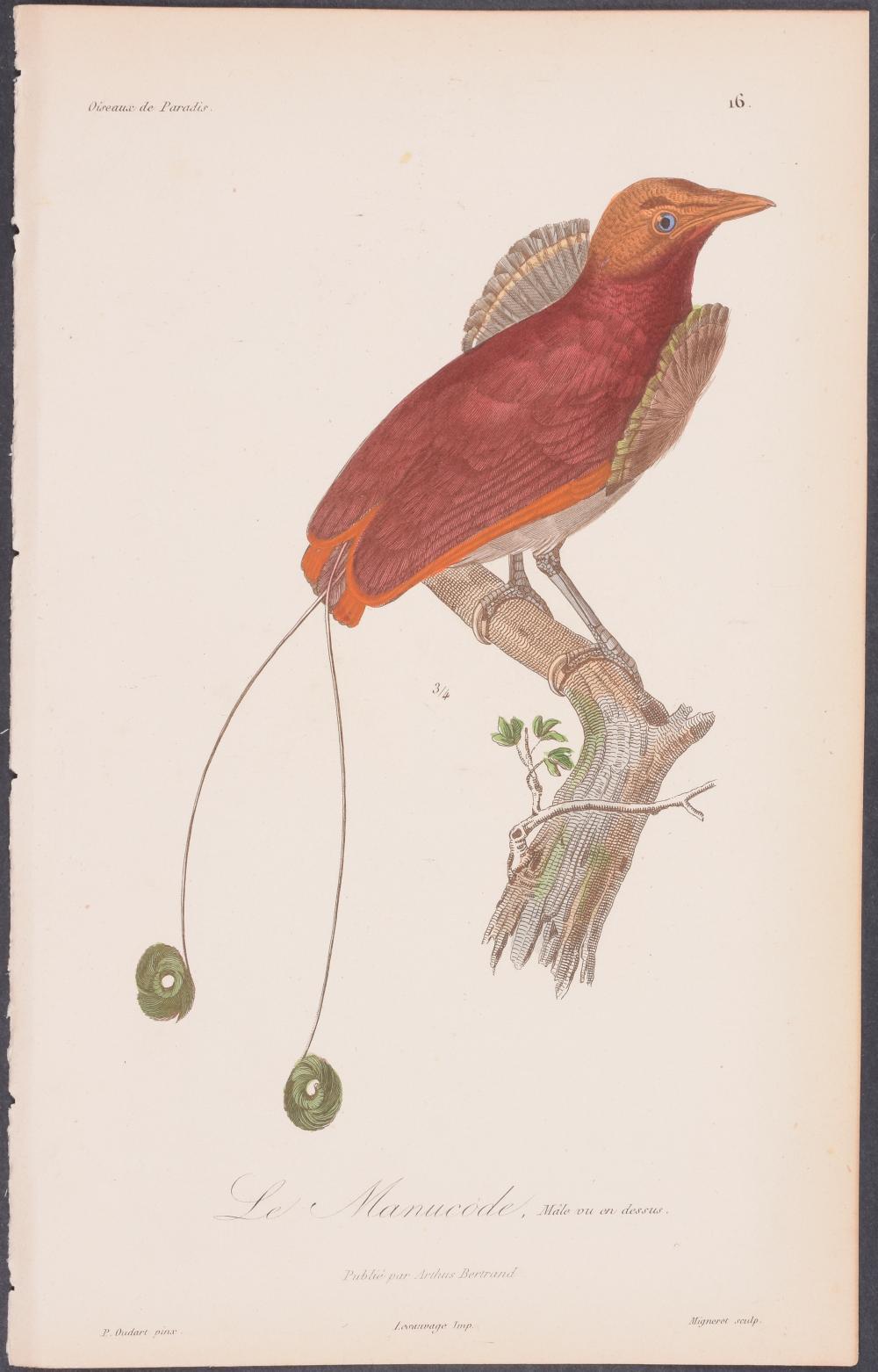 Lot 11053: Lesson - Bird of Paradise. 16