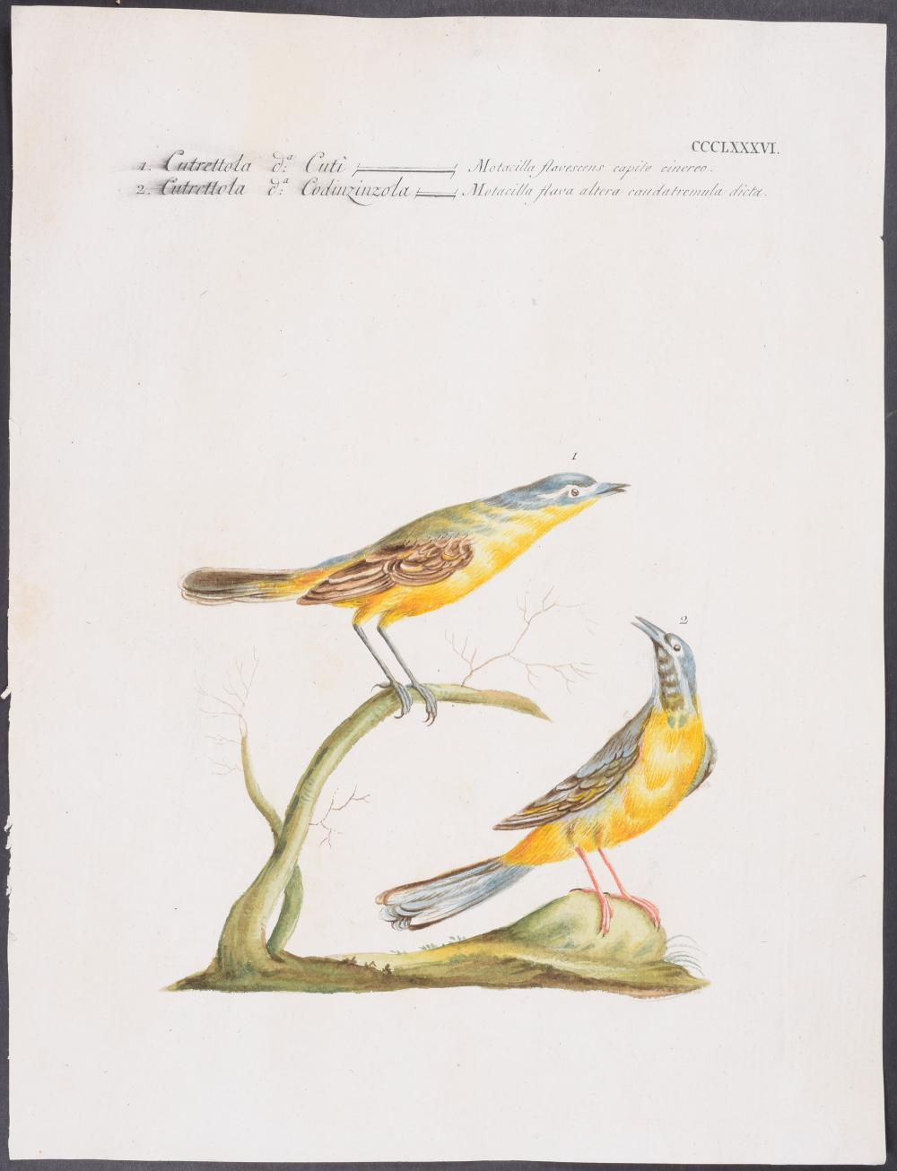 Lot 11089: Manetti - Pair of Bird Engravings
