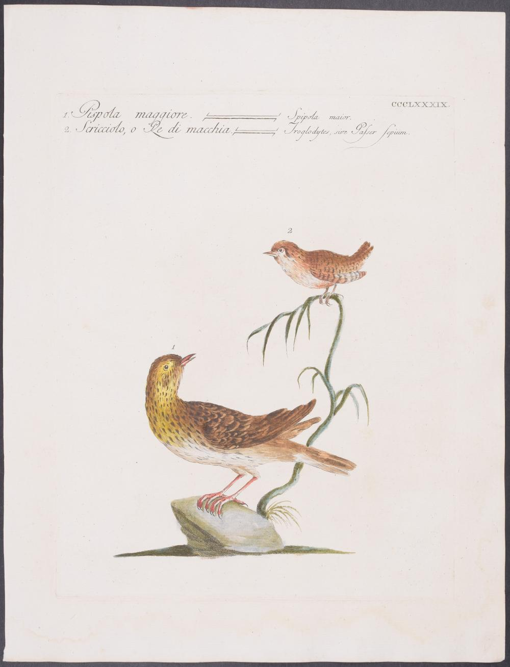 Lot 11090: Manetti - 3 Bird Engravings