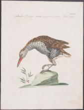 Lot 11092: Manetti - Pair of Shore Bird Engravings