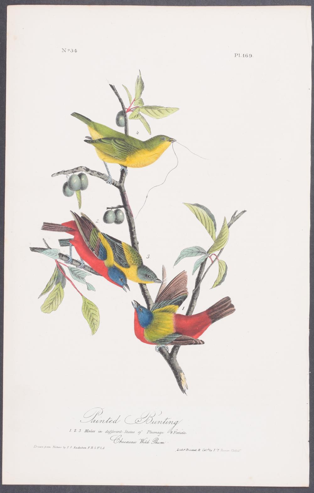 Lot 11112: Audubon - Painted Bunting. 169