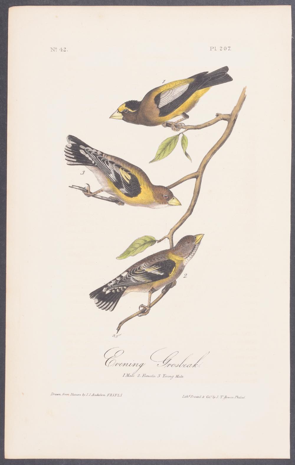 Lot 11100: Audubon - Evening Grosbeak. 207
