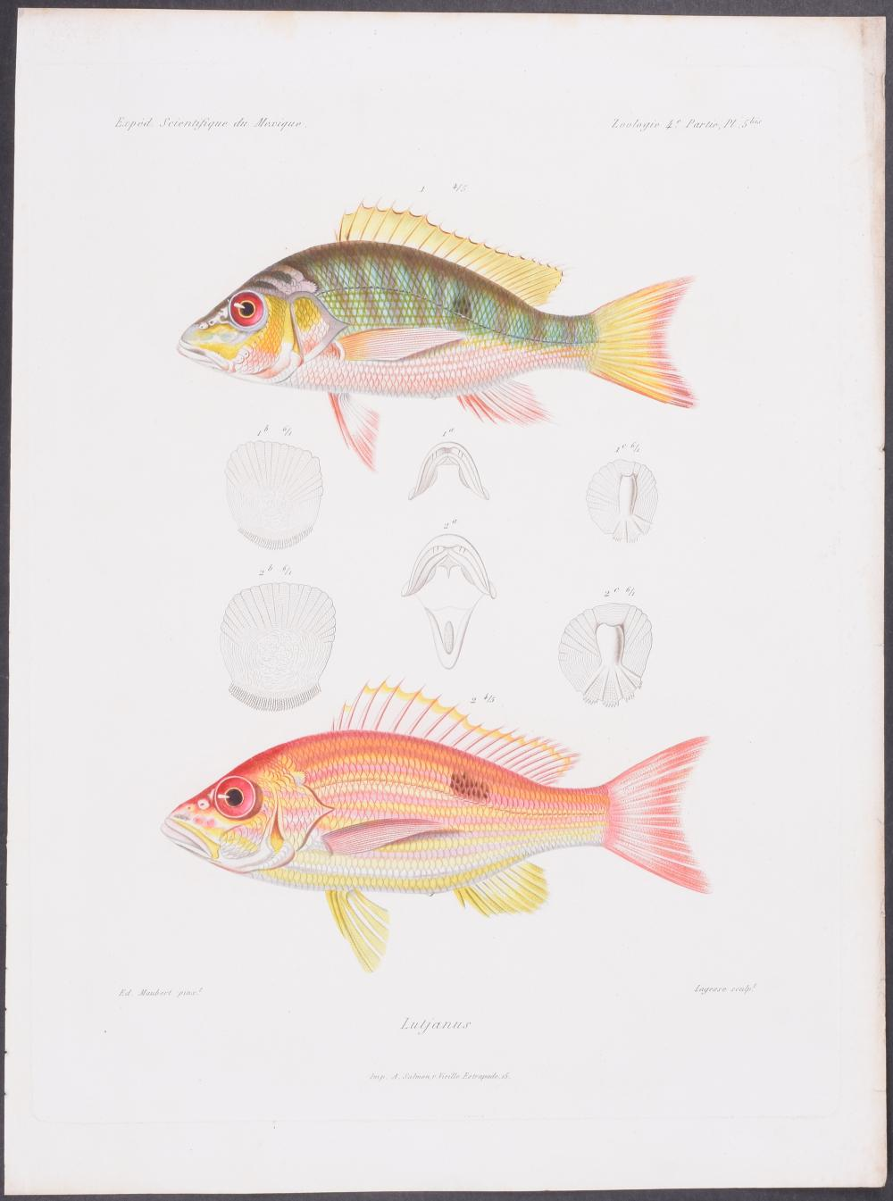 Lot 11130: Vaillant & Bocourt - Fish. 5b