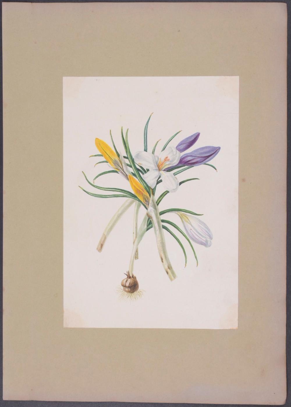 Lot 11117: Original Watercolor - Crocus Bouquet