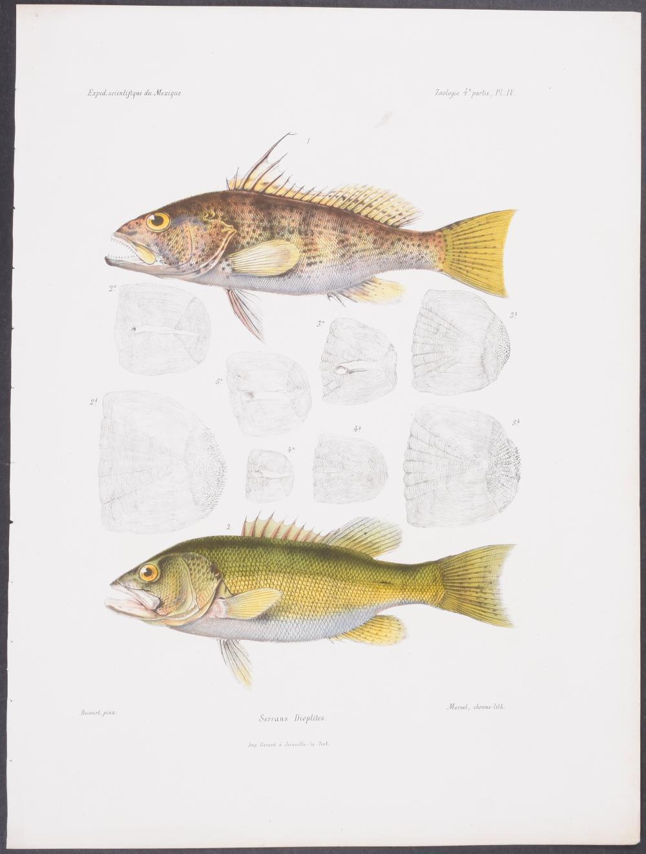 Lot 11125: Vaillant & Bocourt - Fish. 4