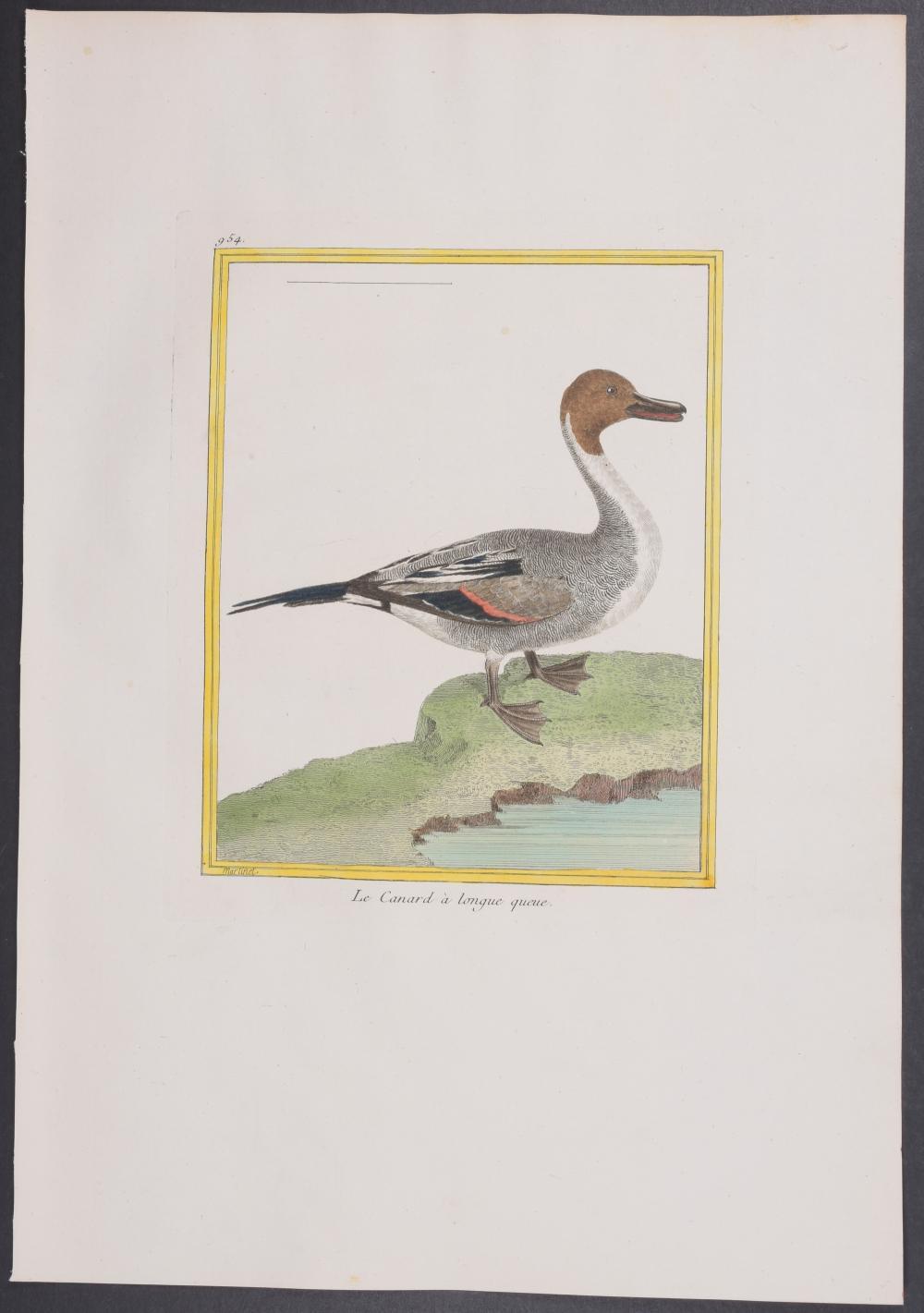 Lot 11135: Martinet & Buffon - Duck. 954