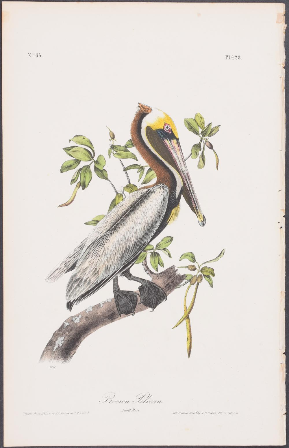 Lot 11115: Audubon - Brown Pelican. 423