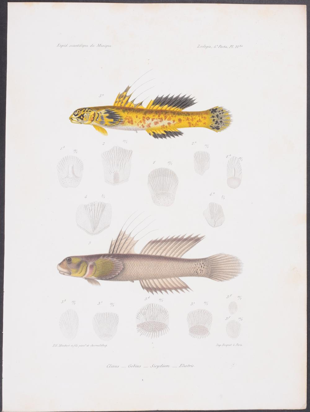 Lot 11126: Vaillant & Bocourt - Fish. 10b