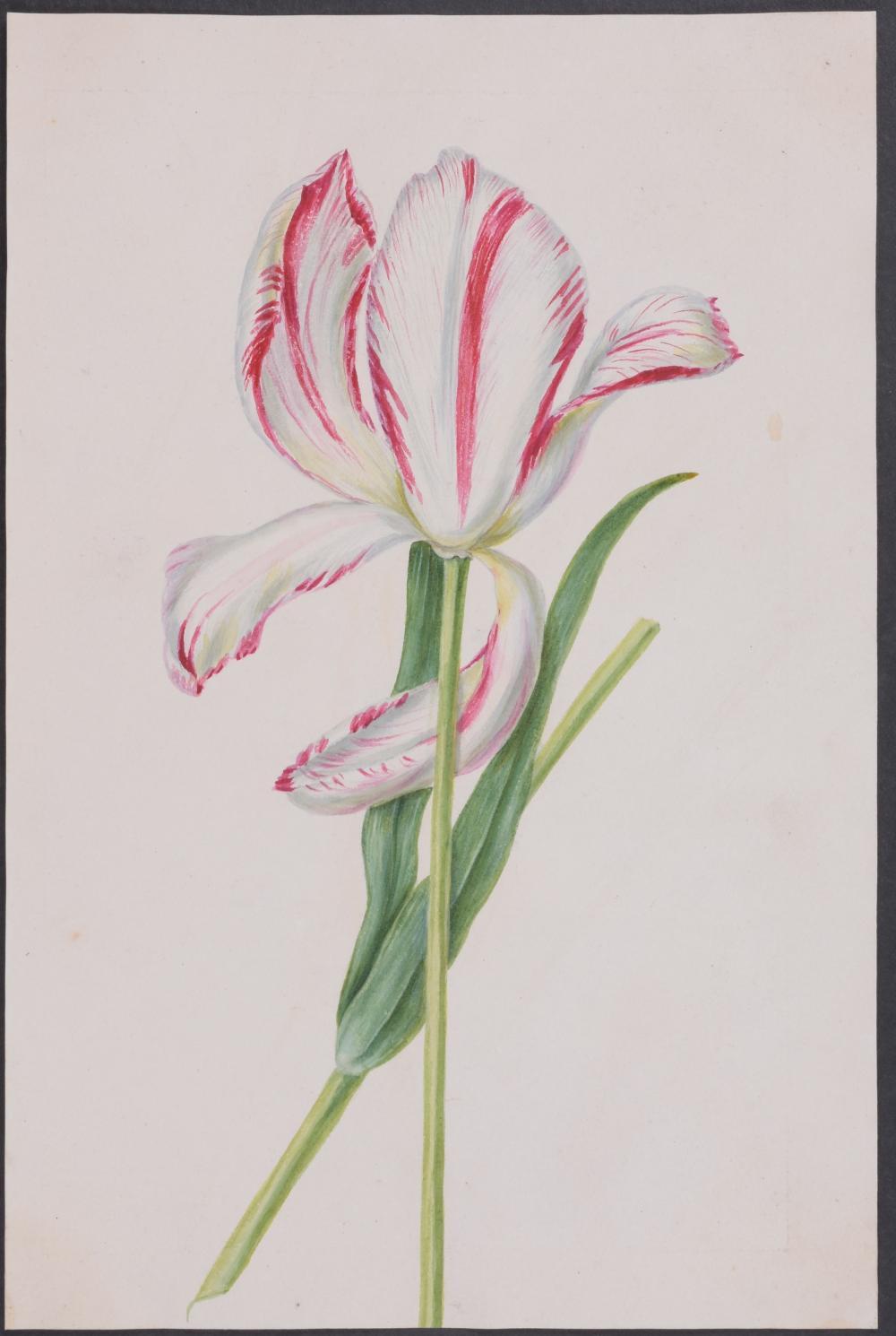 Lot 11122: Original Watercolor - Tulip - 2