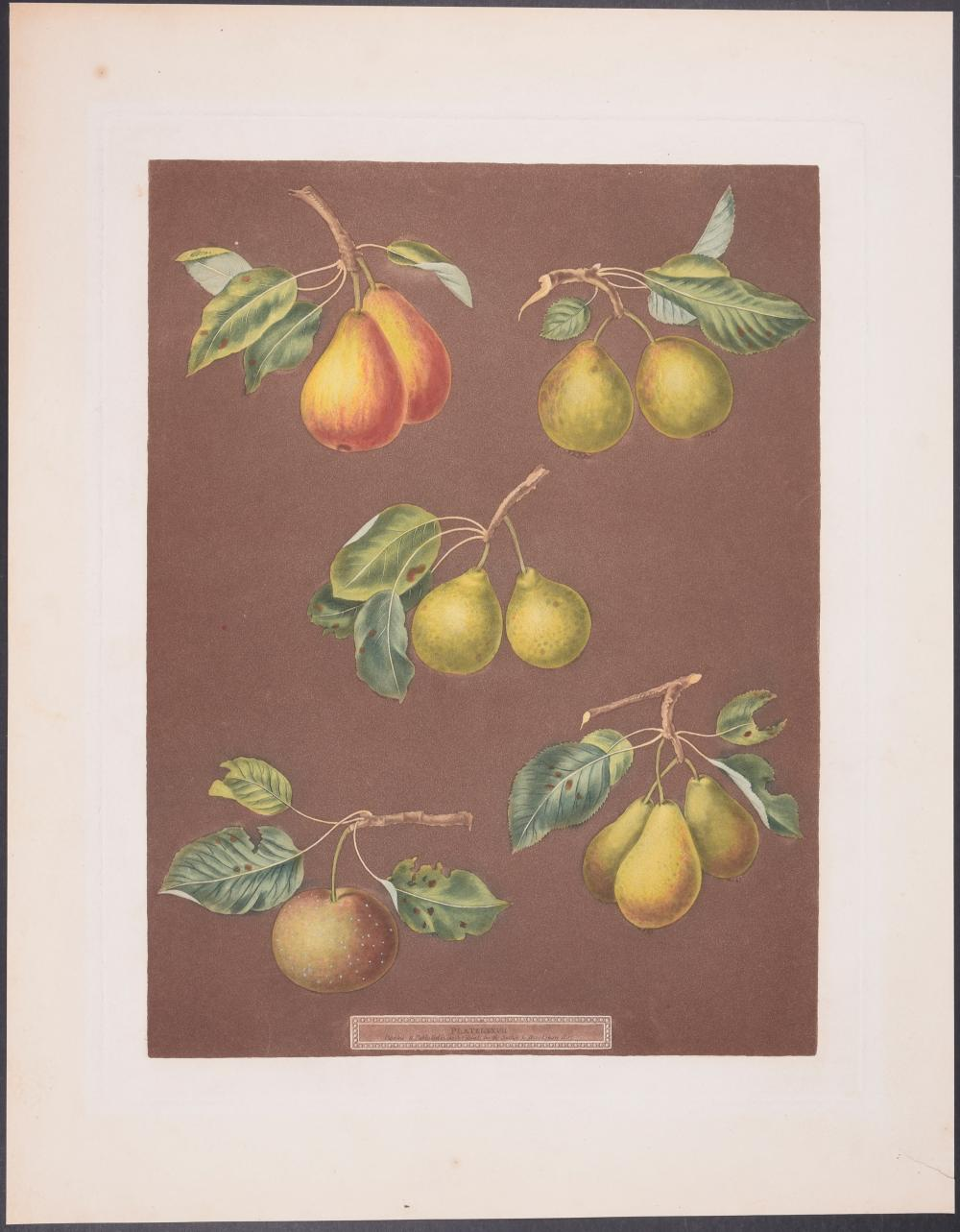 Lot 11158: Brookshaw - Pears. 87