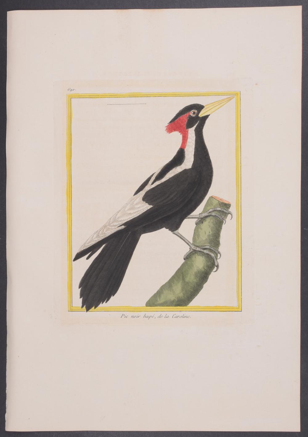 Lot 11143: Martinet & Buffon - Ivory-Billed Woodpecker. 690