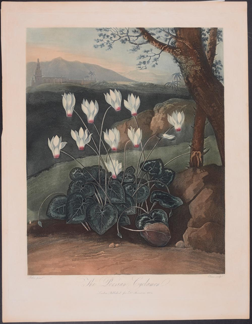 Lot 11160: Thornton - The Persian Cyclamen