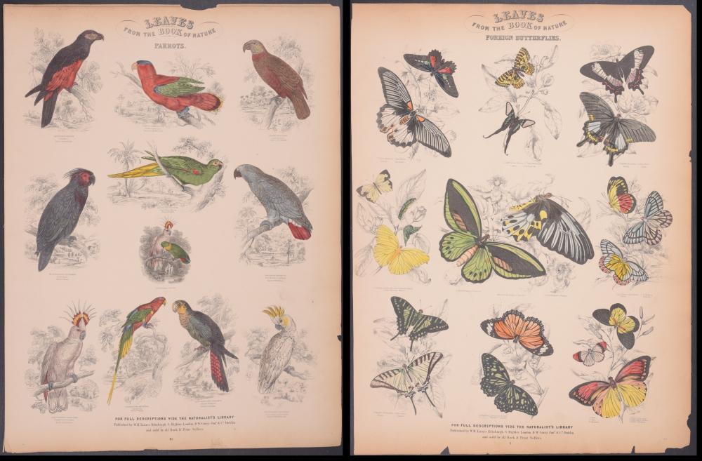 Lot 11045: Jardine - 65 FOLIO Natural History Engravings