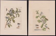 Lot 11057: Merian - 4 Insect Engravings