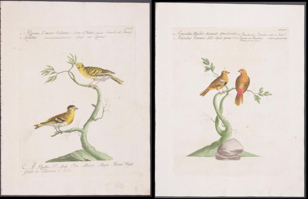 Lot 11091: Manetti - Pair of Bird Engravings